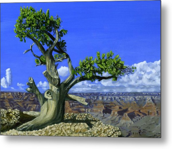 Canyon Tree Metal Print