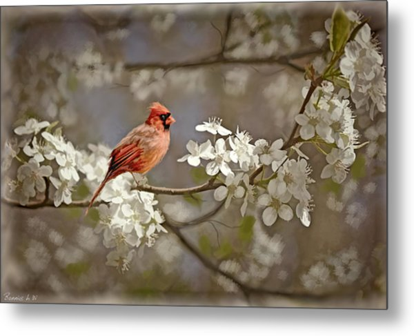Cardinal And Blossoms Metal Print