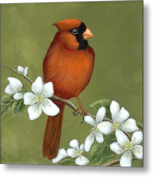 Cardinal And Dogwood Metal Print
