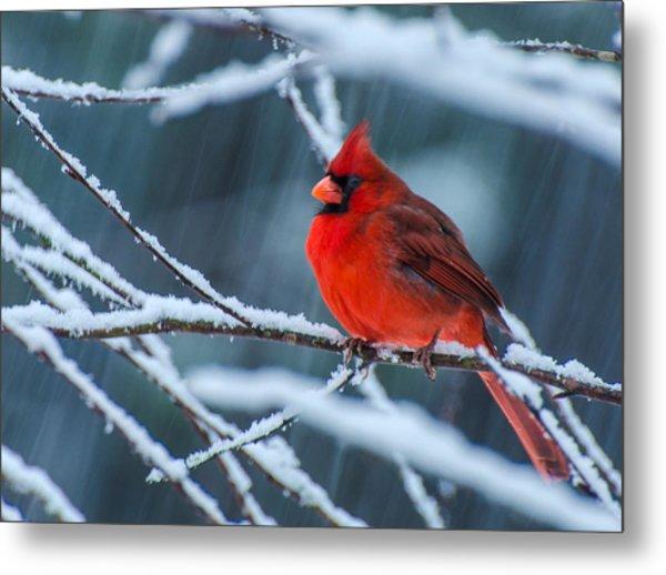 Cardinal In A Storm  Metal Print