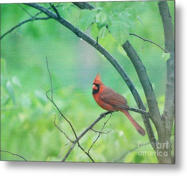 Cardinal In Rain Metal Print