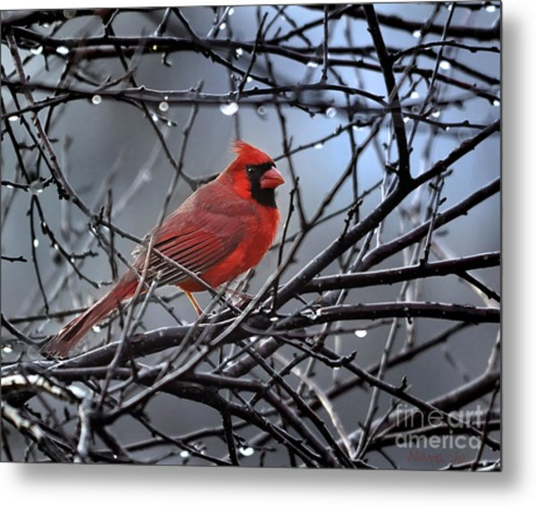 Cardinal In The Rain   Metal Print