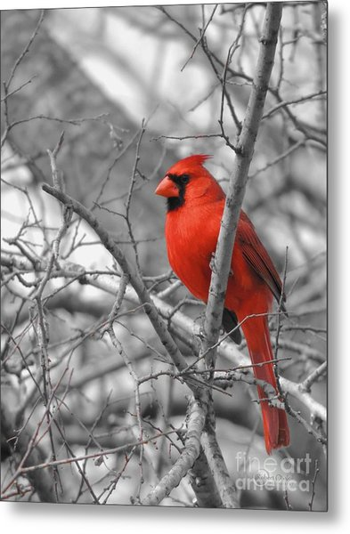 Cardinal Of Hope 002sc Metal Print