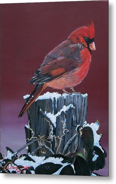 Cardinal Winter Songbird Metal Print