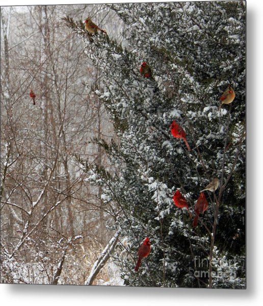 Cardinals In Winter 1 Square Metal Print