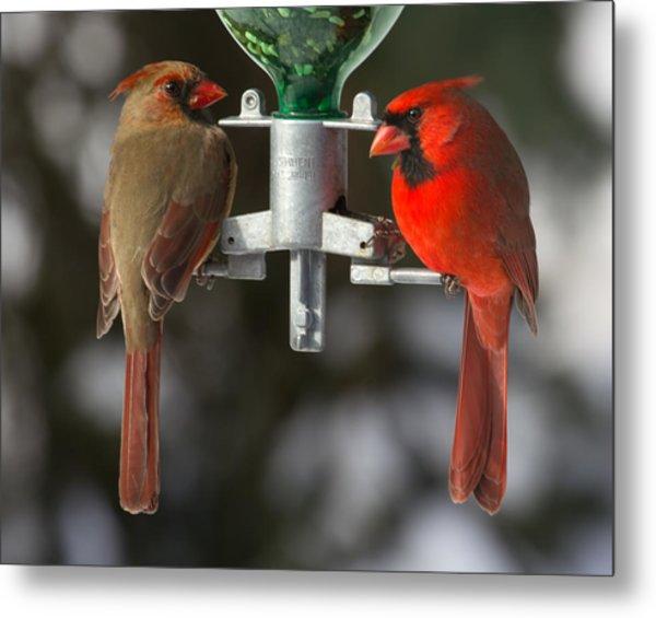 Cardinals Metal Print by John Kunze