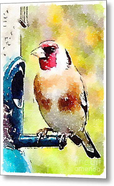 Carduelis Carduelis 'waterfinch' Metal Print