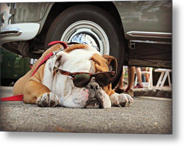 Carmel Cool Dog Metal Print
