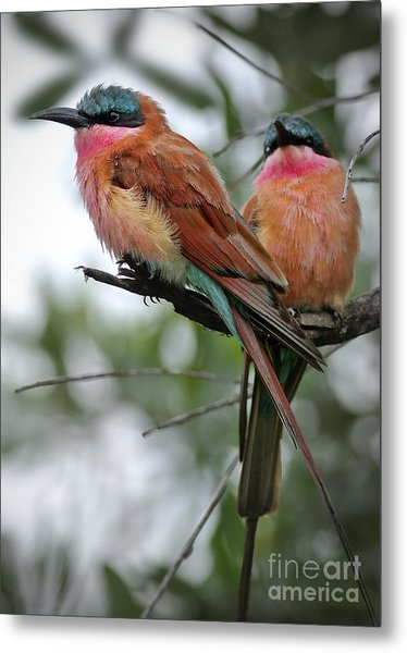 Carmine Bee Eaters Metal Print