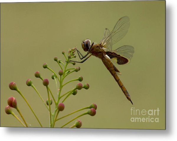 Carolina Saddlebags Metal Print