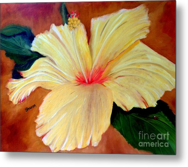 Carols Hibiscus Metal Print by Sharon Burger