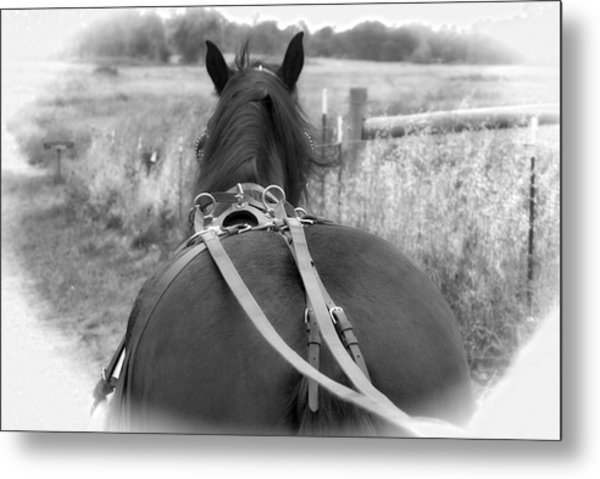 Metal Print featuring the photograph Carraige View Horse by William Havle