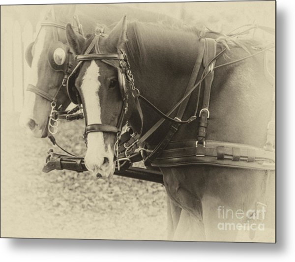 Carriage Horses II Metal Print
