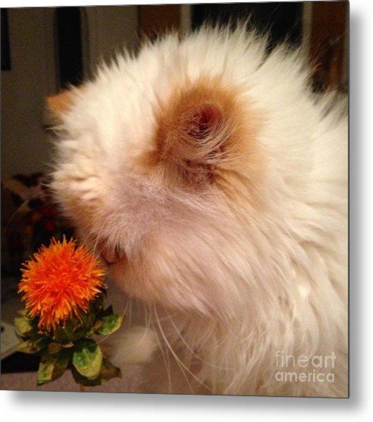 Cat And His Flower Metal Print
