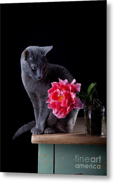 Cat And Tulip Metal Print