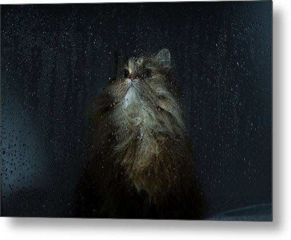 Cat By Rainy Window Metal Print by Benjamin Torode