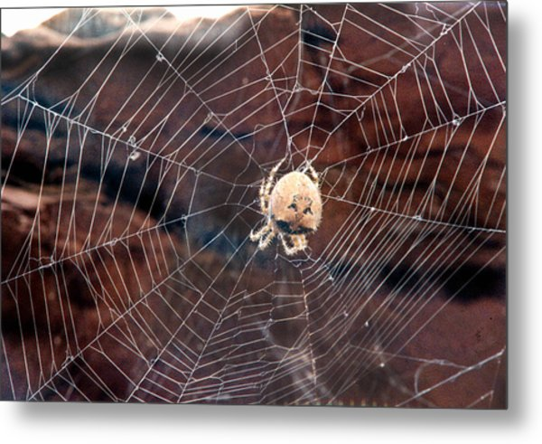 Cat Faced Spider Metal Print