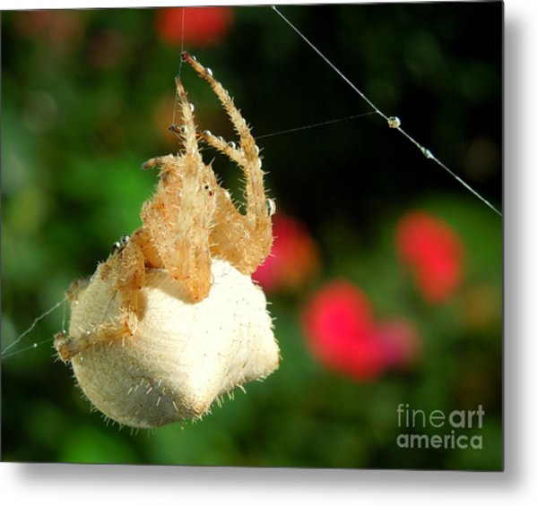 Cat-faced Spider With Pink Metal Print