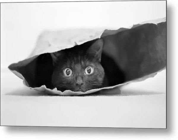 Cat In A Bag Metal Print
