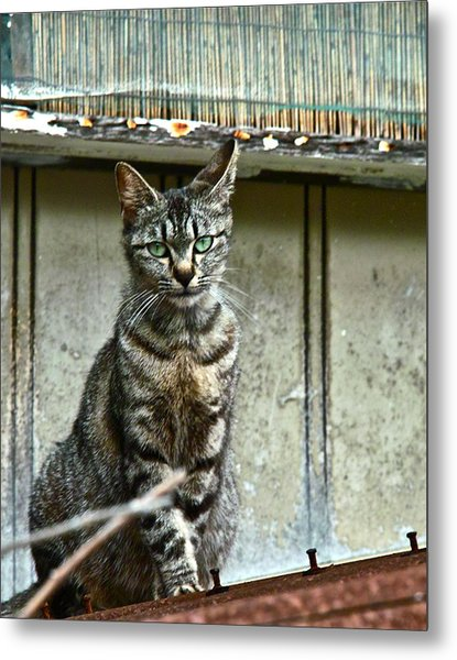 Cat On Roof Metal Print