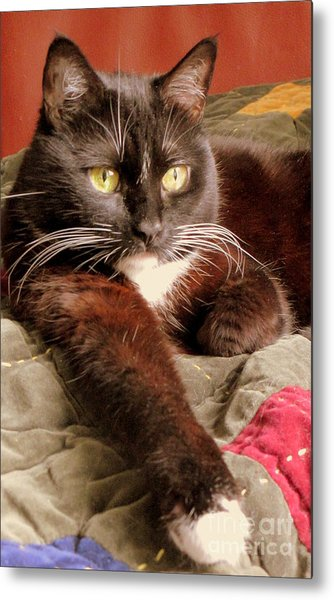 Cat On Velvet Metal Print by Maria Scarfone
