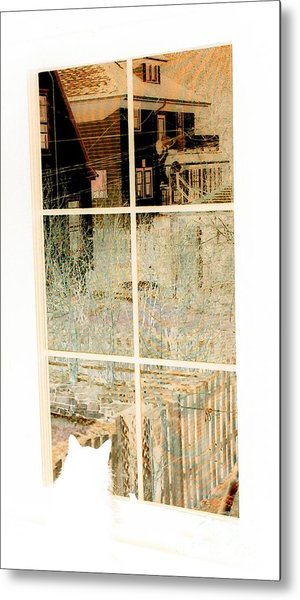 Cat Perspective Metal Print