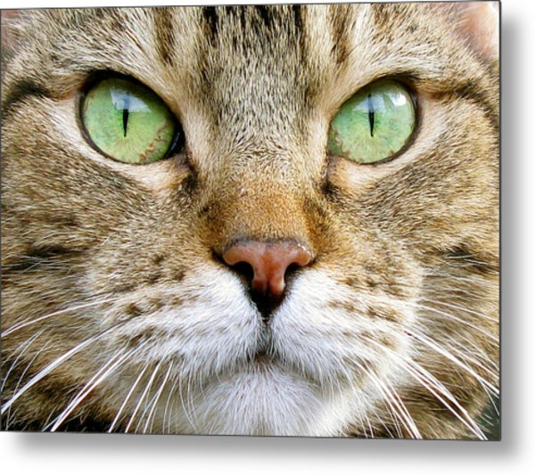 Cat Portrait 1 Metal Print