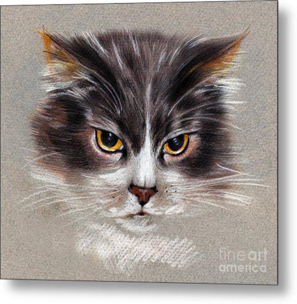 Cat Portrait Yellow Eyes Metal Print