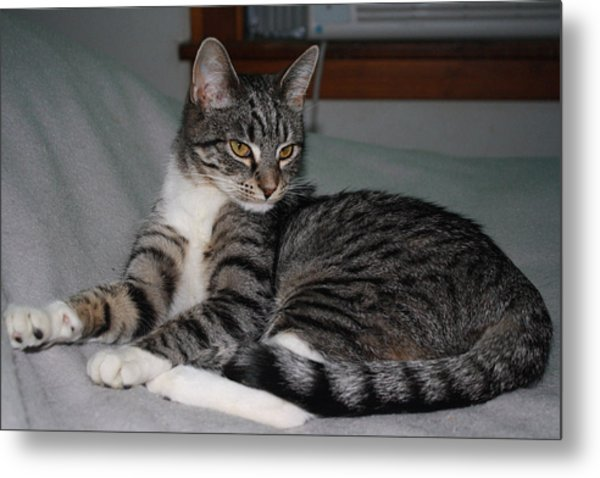 Cat Pride Metal Print by William Mathein