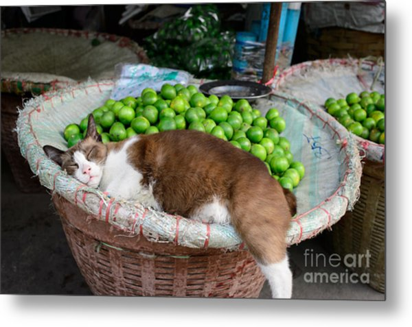 Cat Sleeping Among The Limes Metal Print