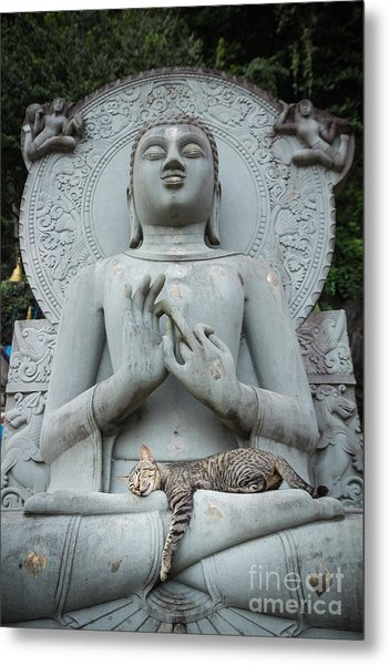 Cat Sleeping On The Lap Buddha Statues. Metal Print
