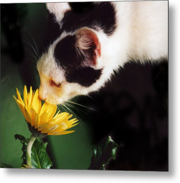 Cat Smelling Flower Metal Print