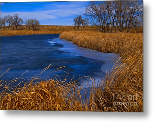 Cat Tails And Ice Metal Print