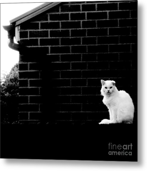 Cat With The Floppy Ear In Black And White Metal Print