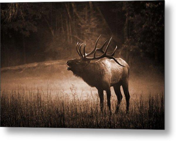 Cataloochee Bull Elk In Sepia Metal Print