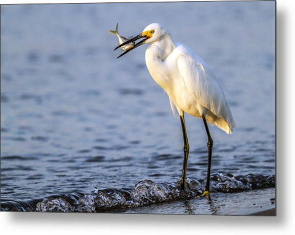 Catch Of The Day Metal Print