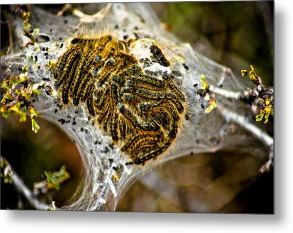 Caterpillars Metal Print