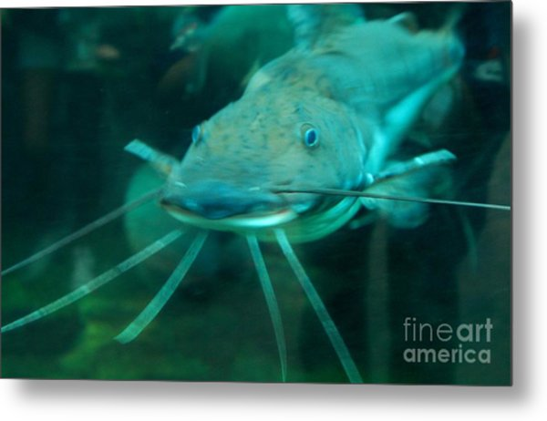 Catfish Billy Metal Print