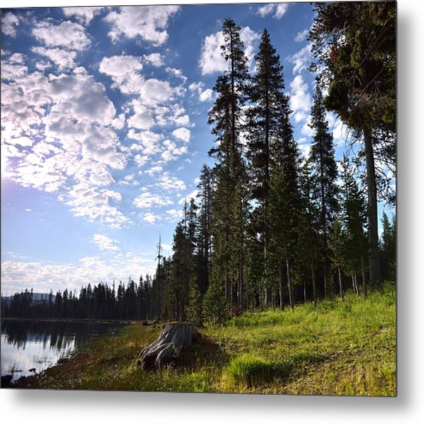 Cathedral Of Trees Metal Print by Rich Rauenzahn