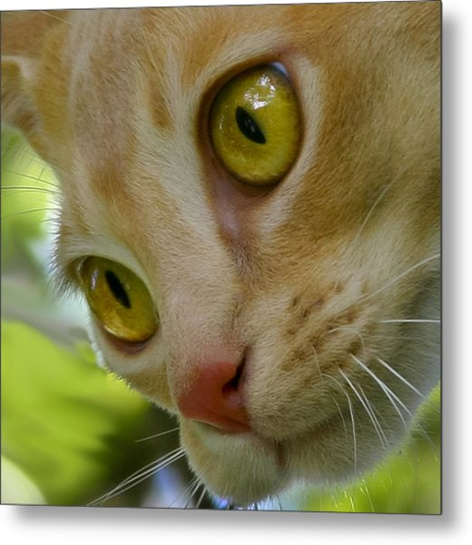 Cats Eyes Metal Print