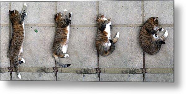 Cat's Life 3 Metal Print