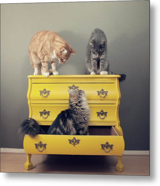 Cats Sitting On Cabinet Metal Print