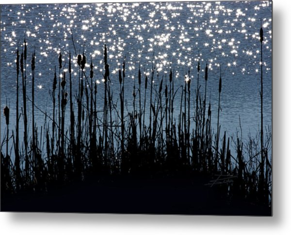 Cattails And Sparkle Metal Print