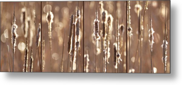 Cattails In The Light Metal Print by Leda Robertson