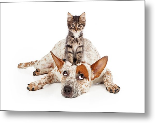 Catte Dog With Kitten On His Head Metal Print