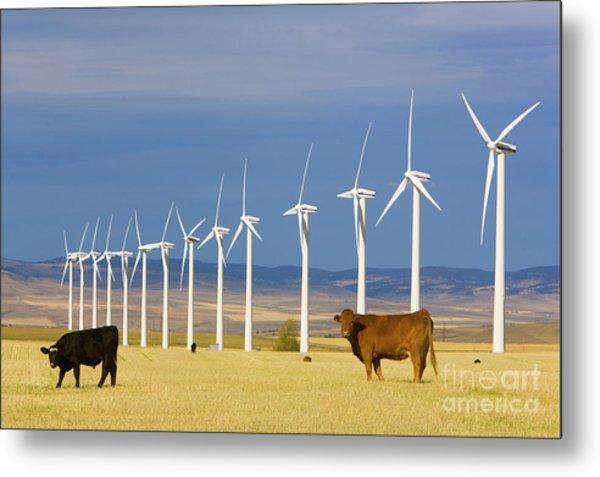 Cattle And Windmills In Alberta Canada Metal Print