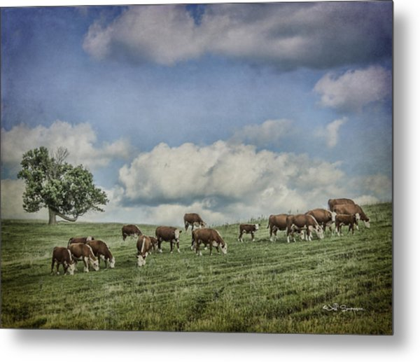 Cattle Grazing Metal Print by Jeff Swanson