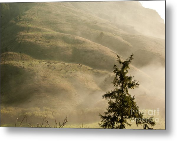 Cattle On Hillside 1.7138 Metal Print by Stephen Parker
