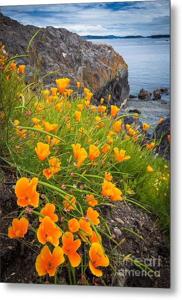 Cattle Point Poppies Metal Print