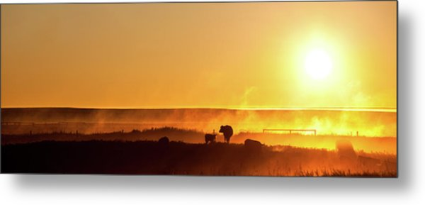 Cattle Silhouette Panorama Metal Print by Imaginegolf
